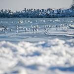 Mamaia iarna – zăpadă, gheață, lebede și mult soare