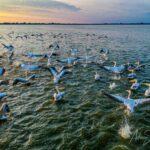O simplă întrebare: ce vă atrage în Delta Dunării?